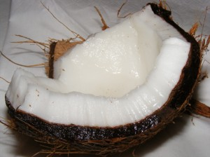 Public domain image of a coconut